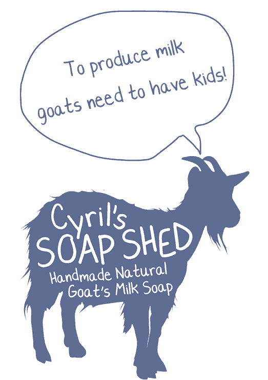 To-produce-milk-goats-need-to-have-kids